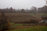 Looking across the ridge at the Muscadine Trellises